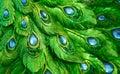 Fotos nur ein exotischer blick des statuenpfaupfau musters Lizenzfreies Stockbild