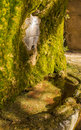 Fountain with stone face an ancient medieval a and moss covering the basin Royalty Free Stock Image