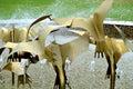 Fountain at Te Awamutu Rose Gardens, Te Awamutu, New Zealand, NZ, NZL Royalty Free Stock Photo
