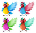 Four adorable parrots illustration of the on a white background Royalty Free Stock Image