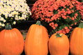 Four big pumpkins and hardy mums bright colorful on wood steps Stock Image