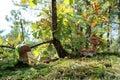 Four boletus mushrooms under an oak Royalty Free Stock Photo