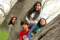 Four children in a tree Stock Photo