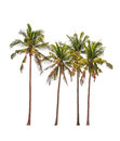 Four coconut palm trees
