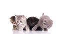 Four curious  kittens Stock Photography
