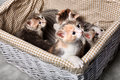 Four cute kitten Royalty Free Stock Photo