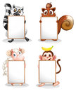 Four different animals with empty whiteboards Royalty Free Stock Photo