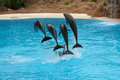 Four dolphins jumping over stick on water Royalty Free Stock Photo