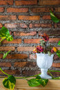 Four dying rose in white vase with devil s ivy and brick wall use cloudy white balance for mood warmth Royalty Free Stock Photo