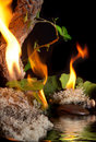 Four elements Royalty Free Stock Photo