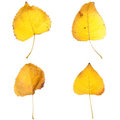 Four fall leaves Royalty Free Stock Photo