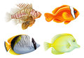 Four fishes illustration of the on a white background Royalty Free Stock Photography