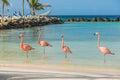Four flamingos on the beach Royalty Free Stock Photo