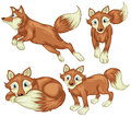 Four foxes illustration of the on a white background Stock Photography