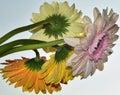 https---www.dreamstime.com-stock-photo-wedding-arrangement-shades-pink-orange-roses-gerbers-pink-orange-roses-gerbers-image107202092