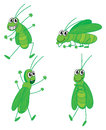 Four grasshoppers illustration of on a white background Royalty Free Stock Photo