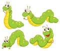 Four green caterpillars Royalty Free Stock Photo