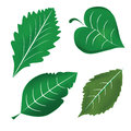 Four icons of leafs beautiful green in white background Royalty Free Stock Image