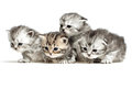 Four kittens on white Stock Images