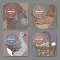 Four labels with hand drawn color poultry sketches.