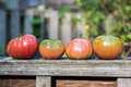 Four large heirloom tomatoes in a row on wood in garden Royalty Free Stock Photo