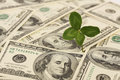 Four leaf clover growing on bunch of greenback horizontal money american hundred dollar bills Stock Image