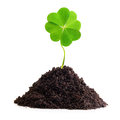 Four leaf clover isolated in ground Royalty Free Stock Photos