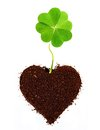 Four leaf clover isolated in ground heart shape Stock Image