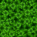 Four leaf clover seamless pattern. Royalty Free Stock Photo