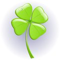 Four leaf clover. Vector illustration. Stock Photography