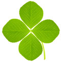 Four leaf clover on white Royalty Free Stock Photos