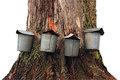 Four maple sap buckets tapped springtime maple run Royalty Free Stock Photography