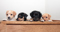 Four mixed breed puppies adorable blonde tan and black soft Royalty Free Stock Photography