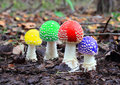 Four multicoloured fly agaric Royalty Free Stock Photo