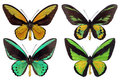 Four papilio Stock Photos
