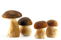 Four porcini mushroom isolaten on wnite Royalty Free Stock Photo