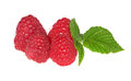 Four ripe raspberries and green leaves Stock Photos