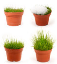 Four season grass Royalty Free Stock Image