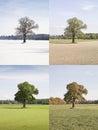Four Season Tree