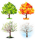 Four season trees Royalty Free Stock Image