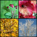 stock image of  Four seasons