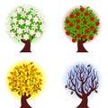 Four Seasons Of Apple  Tree.