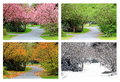 Four seasons of cherry trees on the same street spring summer fall and winter photographed from exact location Royalty Free Stock Photography