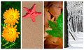 Four seasons collage Royalty Free Stock Image