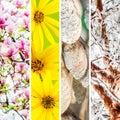 Four seasons collage Royalty Free Stock Photo