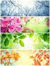stock image of  Four seasons. A pictures that shows four different pictures representing the four seasons