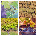 Four seasons in provence collage with photos of vineyards ib different Royalty Free Stock Images