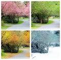 Four seasons of the same street Royalty Free Stock Photo