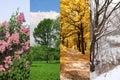 Four seasons spring, summer, autumn, winter Royalty Free Stock Photo