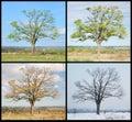 Cuatro árbol